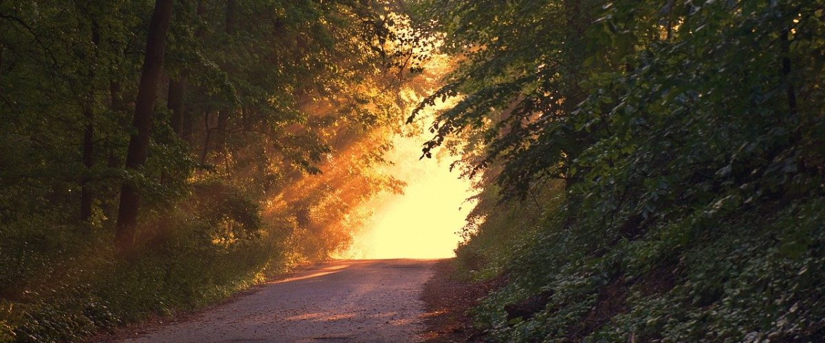 sunlight_covered_road